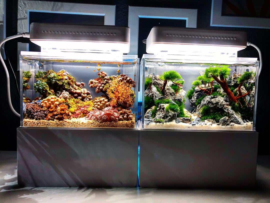 210: Das Nano Meerwasseraquarium - Möglichkeiten, Grenzen und Tipps zur Pflege (Adrie Baumann) 10