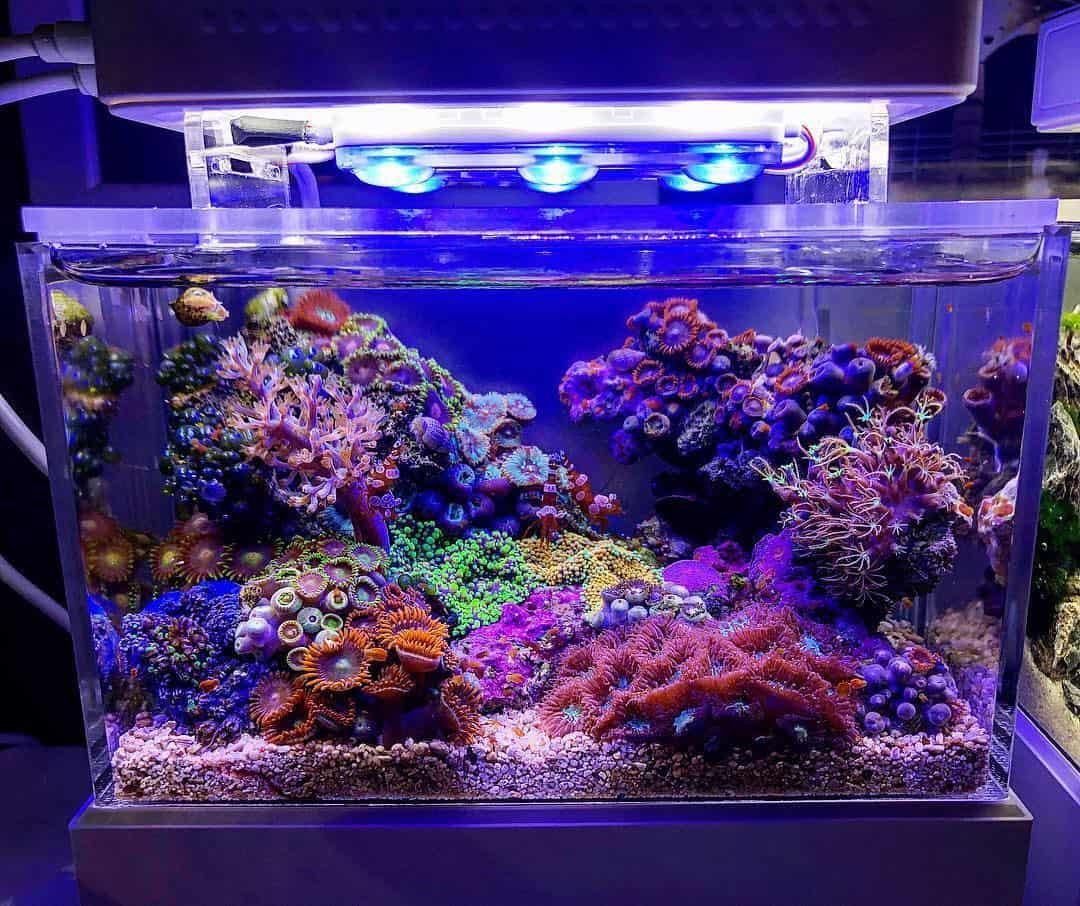 210: Das Nano Meerwasseraquarium - Möglichkeiten, Grenzen und Tipps zur Pflege (Adrie Baumann) 11