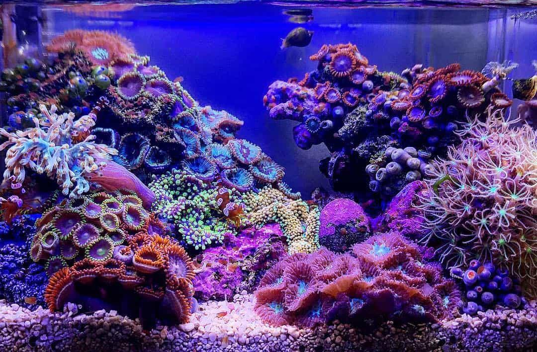 210: Das Nano Meerwasseraquarium - Möglichkeiten, Grenzen und Tipps zur Pflege (Adrie Baumann) 12
