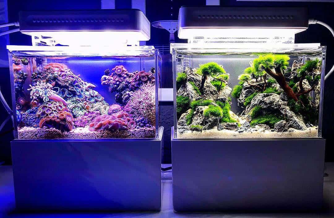 210: Das Nano Meerwasseraquarium - Möglichkeiten, Grenzen und Tipps zur Pflege (Adrie Baumann) 13