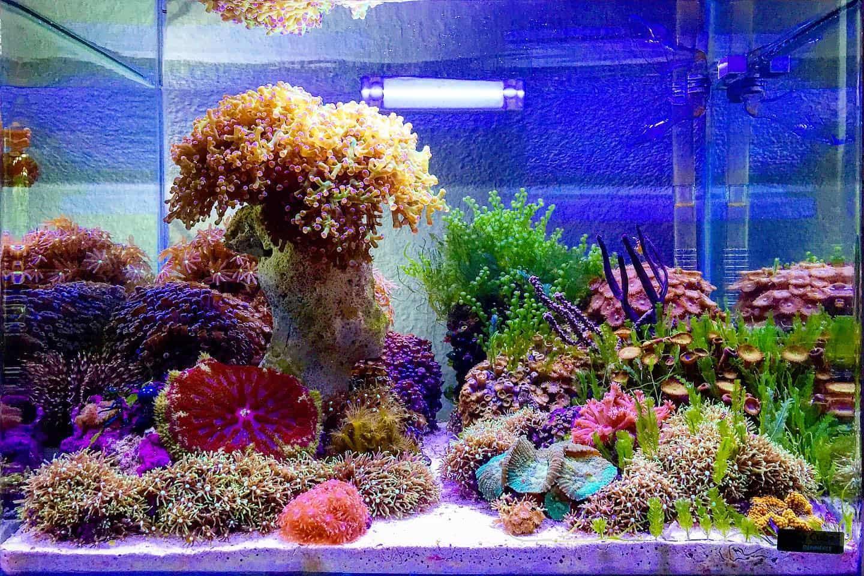 210: Das Nano Meerwasseraquarium - Möglichkeiten, Grenzen und Tipps zur Pflege (Adrie Baumann) 14