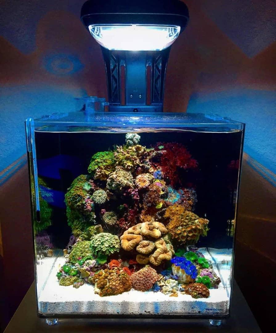 210: Das Nano Meerwasseraquarium - Möglichkeiten, Grenzen und Tipps zur Pflege (Adrie Baumann) 15
