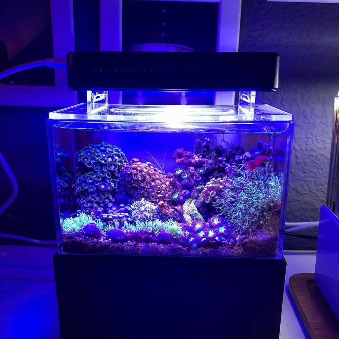 210: Das Nano Meerwasseraquarium - Möglichkeiten, Grenzen und Tipps zur Pflege (Adrie Baumann) 16
