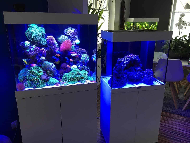210: Das Nano Meerwasseraquarium - Möglichkeiten, Grenzen und Tipps zur Pflege (Adrie Baumann) 17