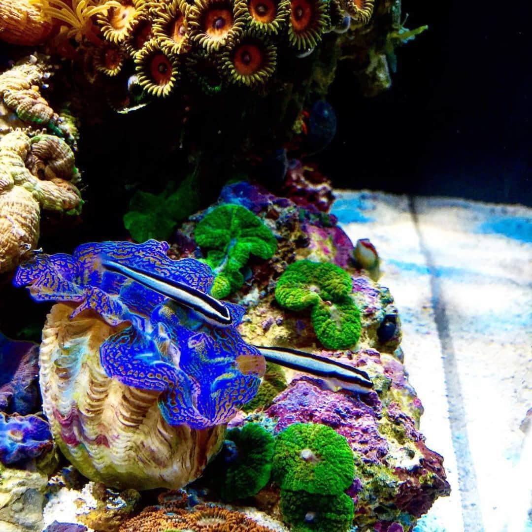 210: Das Nano Meerwasseraquarium - Möglichkeiten, Grenzen und Tipps zur Pflege (Adrie Baumann) 18