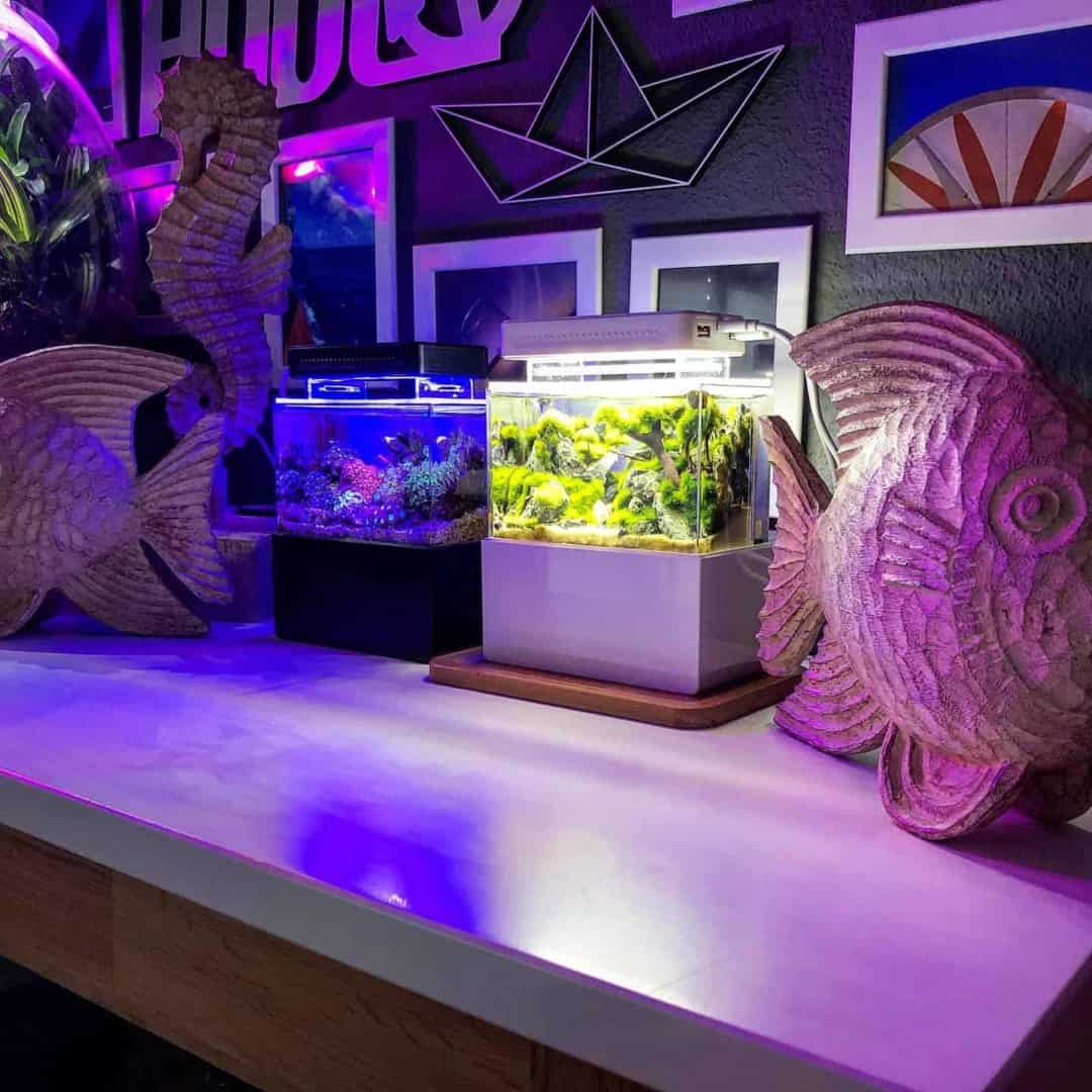 210: Das Nano Meerwasseraquarium - Möglichkeiten, Grenzen und Tipps zur Pflege (Adrie Baumann) 19