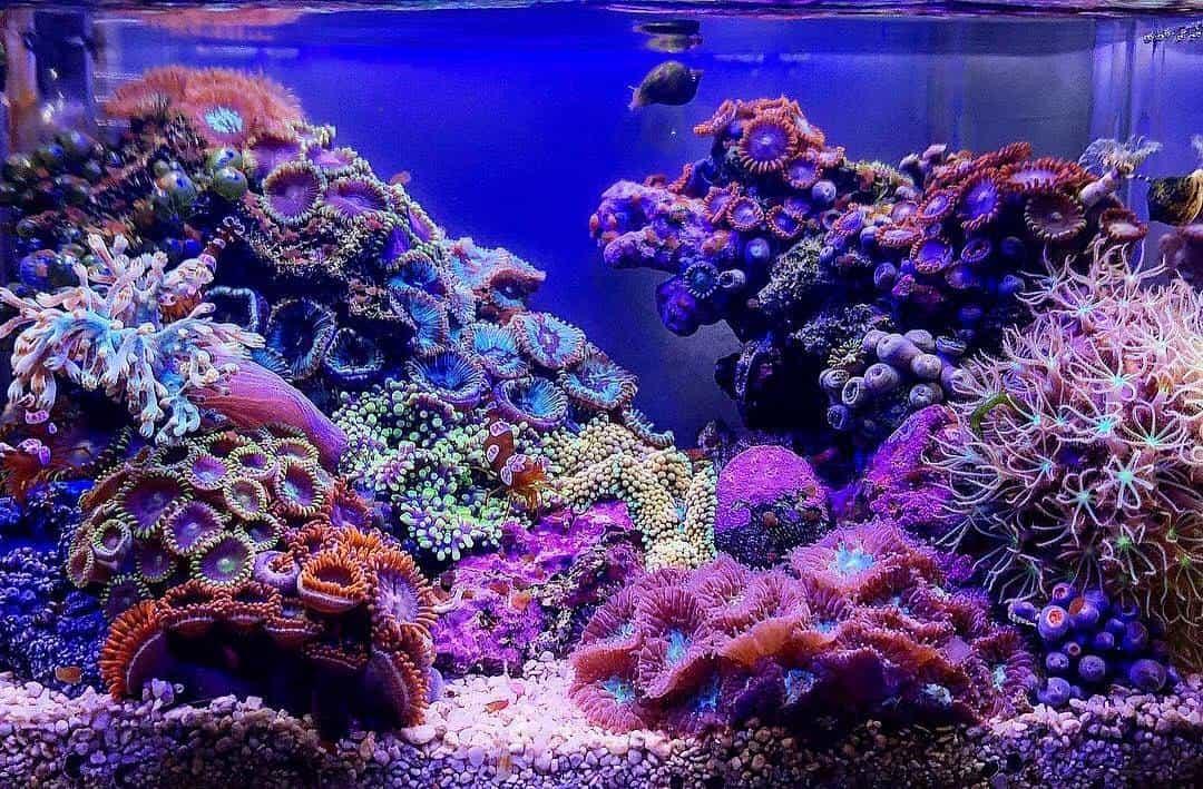 210: Das Nano Meerwasseraquarium - Möglichkeiten, Grenzen und Tipps zur Pflege (Adrie Baumann) 20
