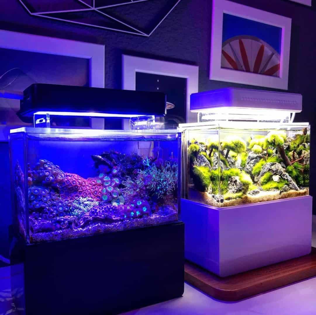 210: Das Nano Meerwasseraquarium - Möglichkeiten, Grenzen und Tipps zur Pflege (Adrie Baumann) 21