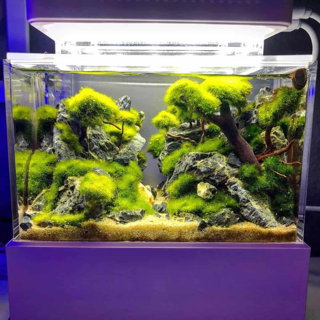 210: Das Nano Meerwasseraquarium - Möglichkeiten, Grenzen und Tipps zur Pflege (Adrie Baumann) 23