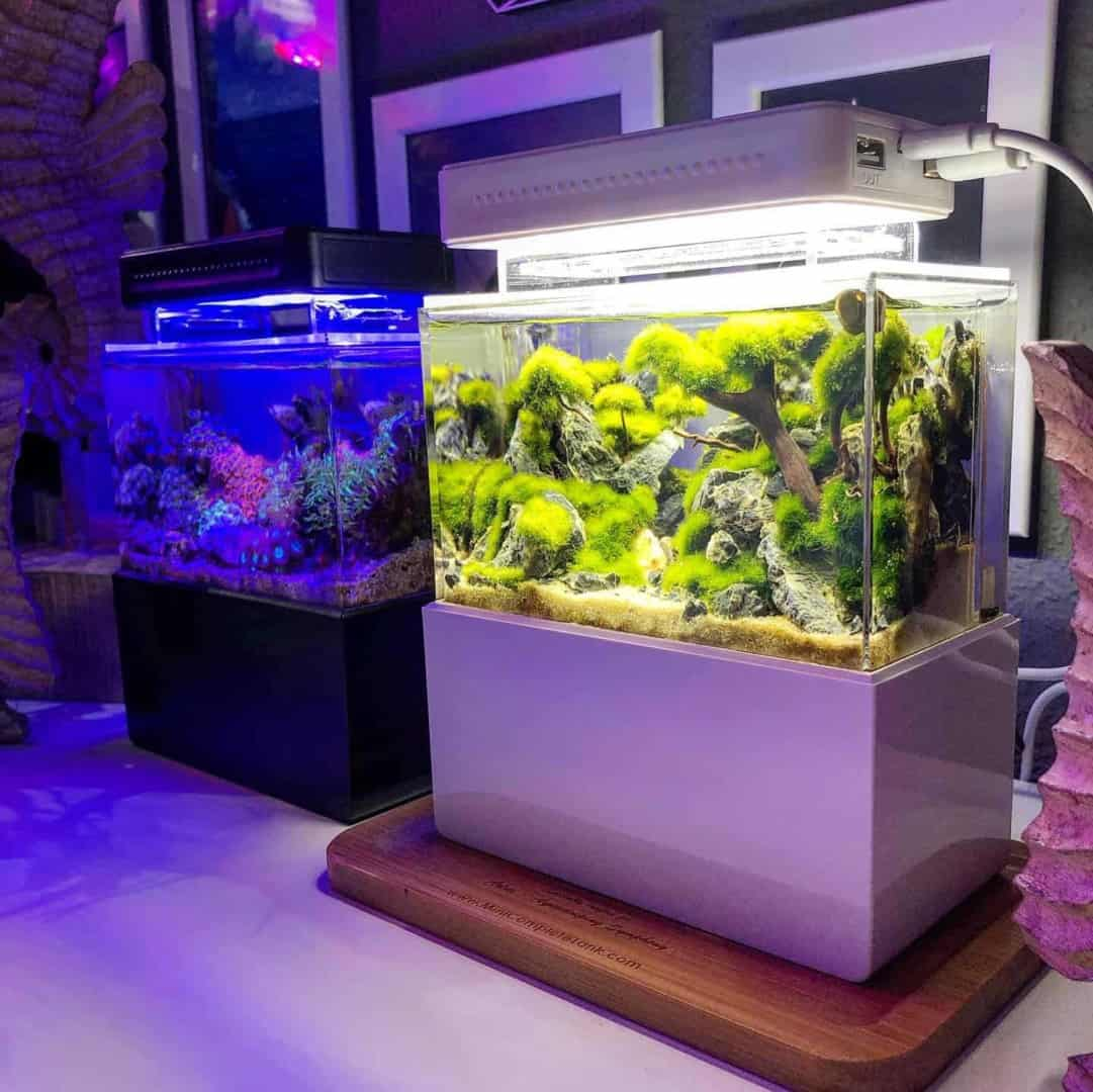 210: Das Nano Meerwasseraquarium - Möglichkeiten, Grenzen und Tipps zur Pflege (Adrie Baumann) 24