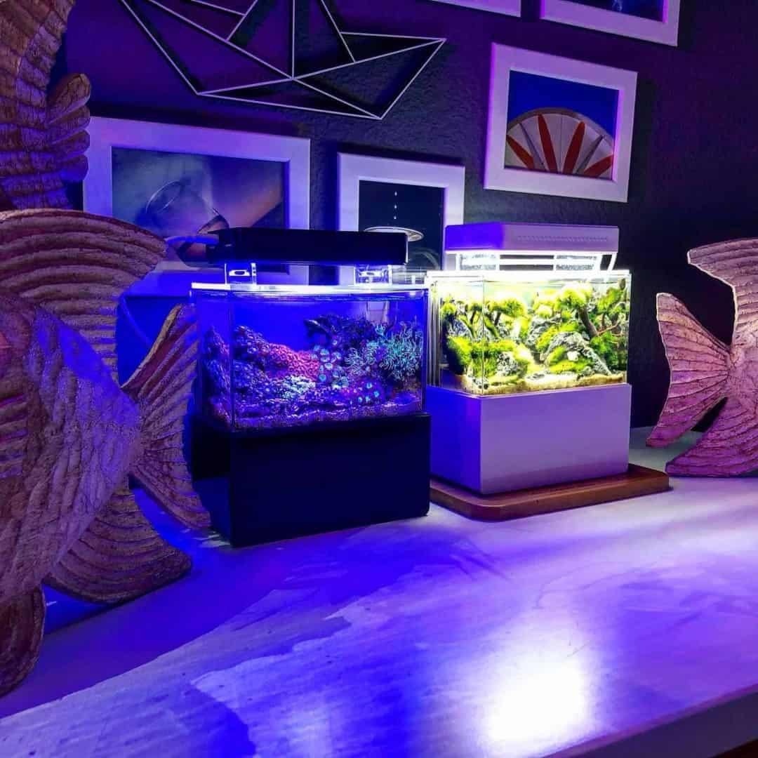 210: Das Nano Meerwasseraquarium - Möglichkeiten, Grenzen und Tipps zur Pflege (Adrie Baumann) 25