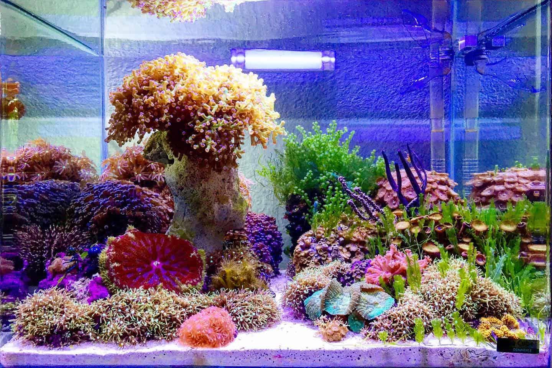 210: Das Nano Meerwasseraquarium - Möglichkeiten, Grenzen und Tipps zur Pflege (Adrie Baumann) 26