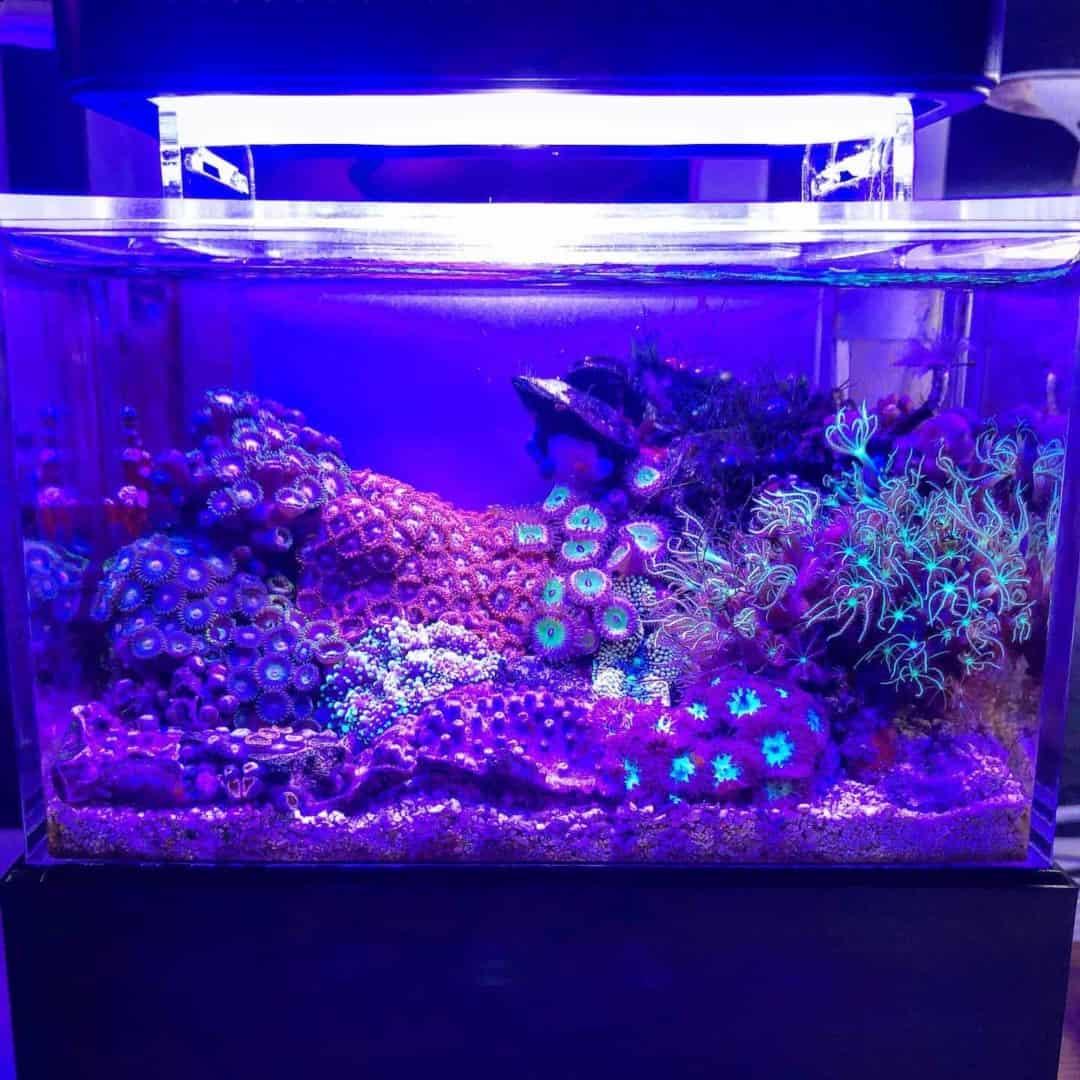 210: Das Nano Meerwasseraquarium - Möglichkeiten, Grenzen und Tipps zur Pflege (Adrie Baumann) 27