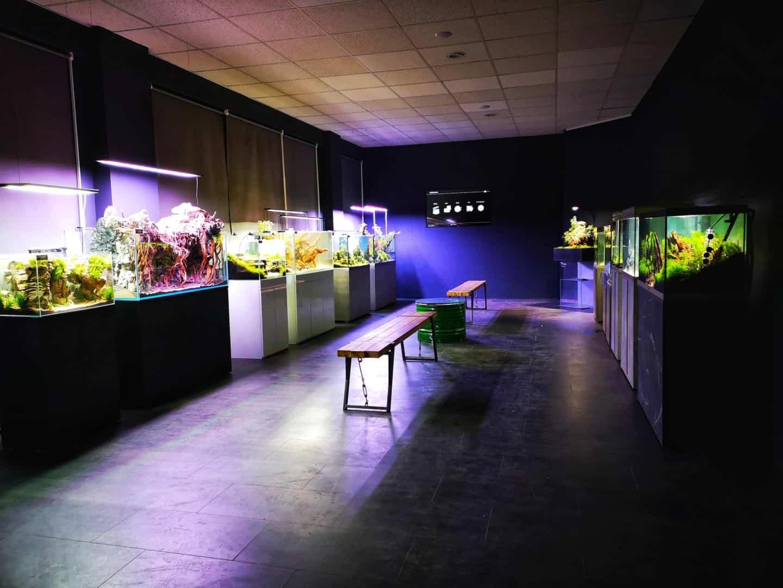 208 - Die Scapers Lounge - Neueröffnung des Mekkas für Naturaquarienliebhaber (Sascha Hoyer & Matthias Levy) 6