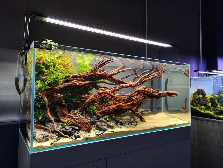 208 - Die Scapers Lounge - Neueröffnung des Mekkas für Naturaquarienliebhaber (Sascha Hoyer & Matthias Levy) 11