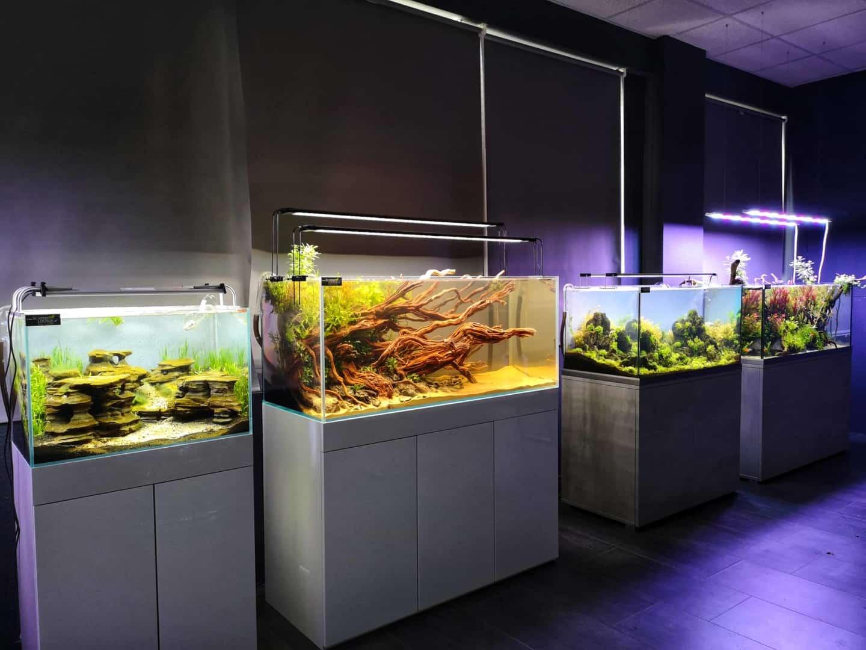 208 - Die Scapers Lounge - Neueröffnung des Mekkas für Naturaquarienliebhaber (Sascha Hoyer & Matthias Levy) 13