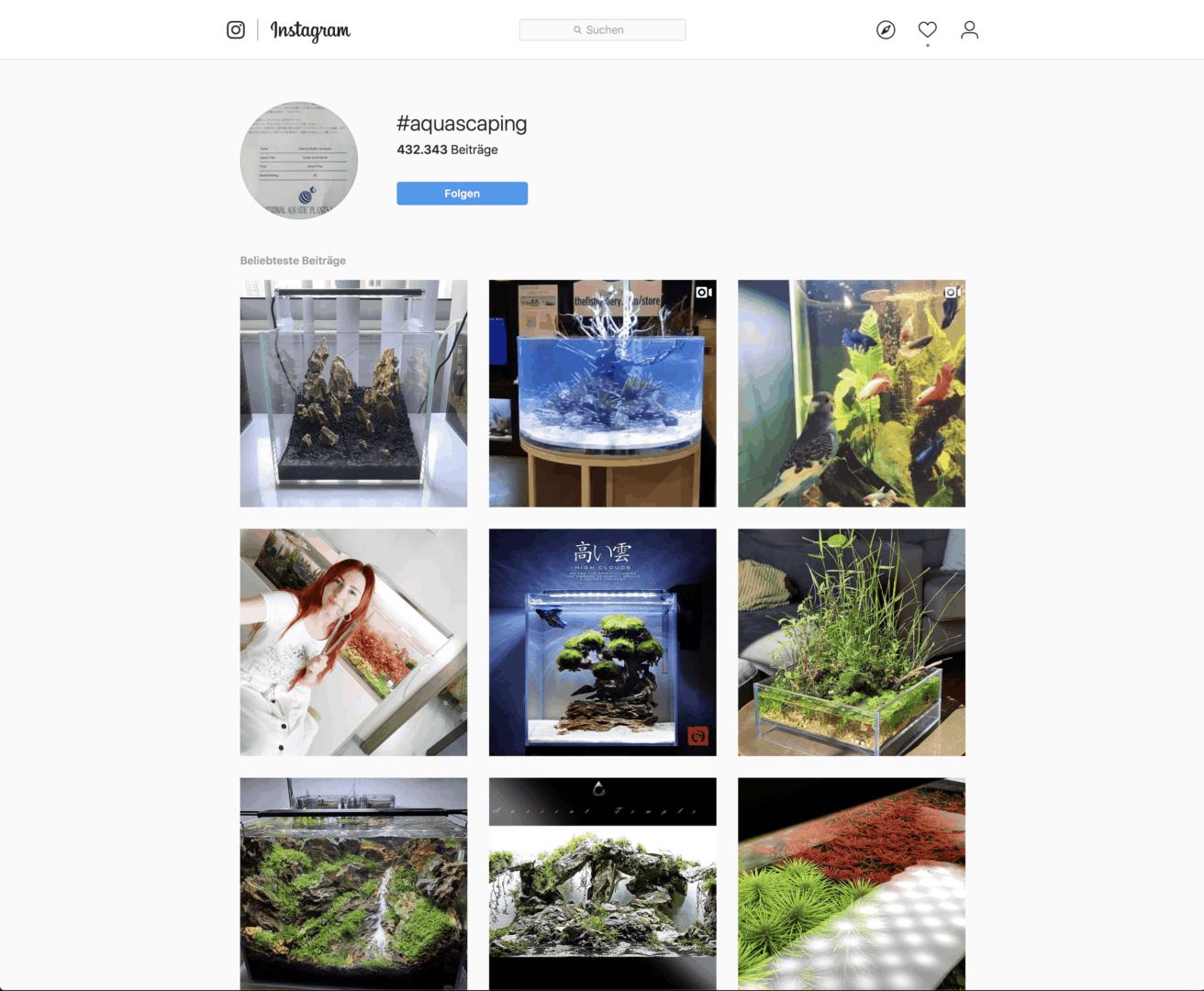 209 - @scapeling - Das Leben eines Aquarianers auf Instagram (Fabian Beck) 6