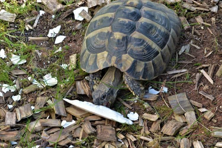 Im Rhythmus der Jahreszeiten: Landschildkröten artgerecht ernähren 1