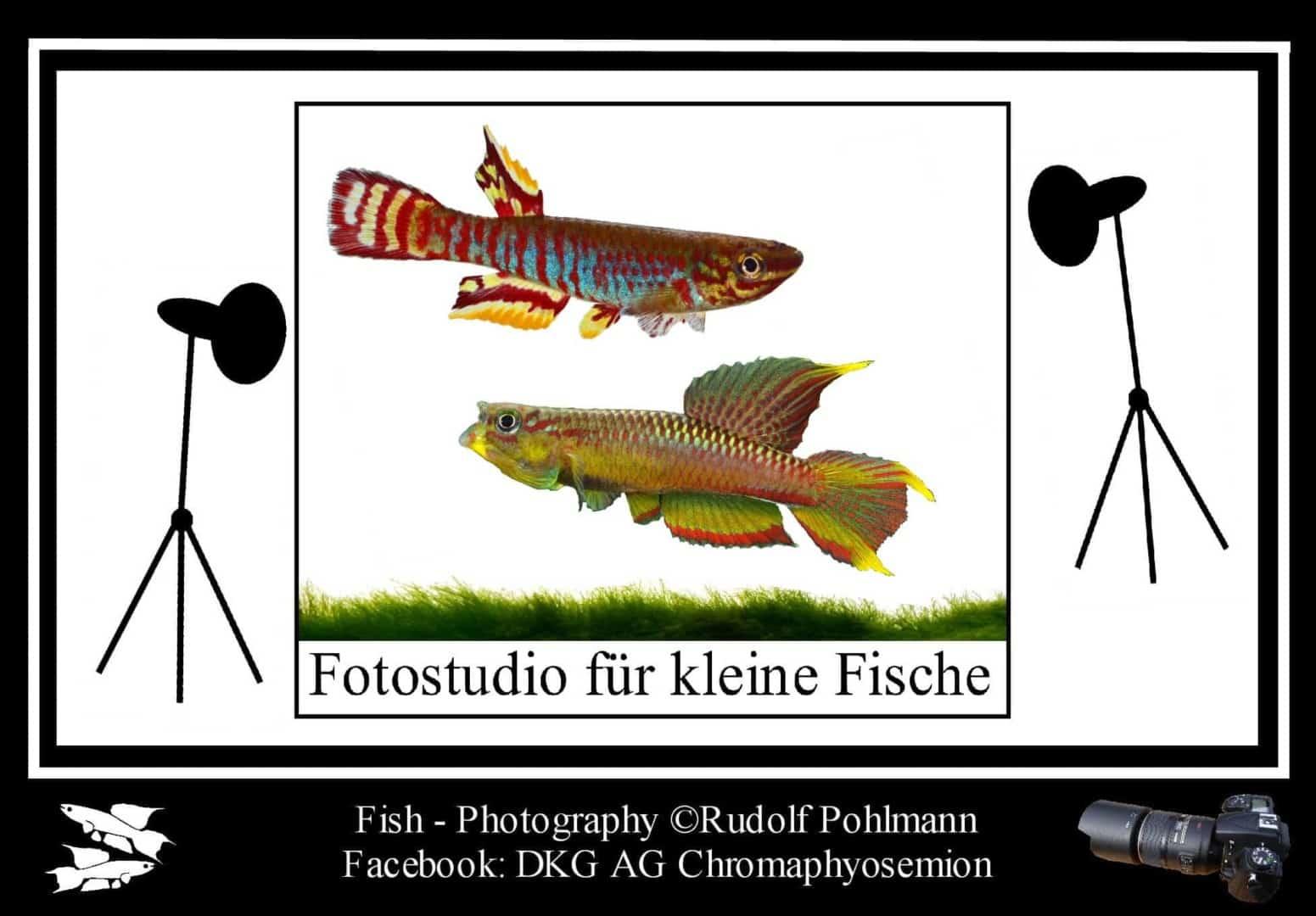 Aquarienfotografie 2