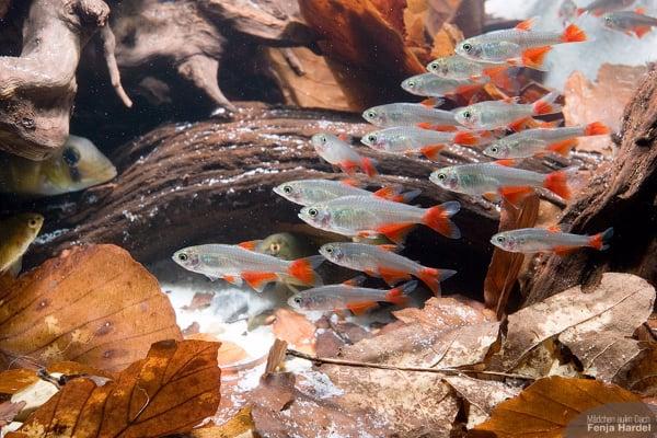 Facetten der Aquaristik 2