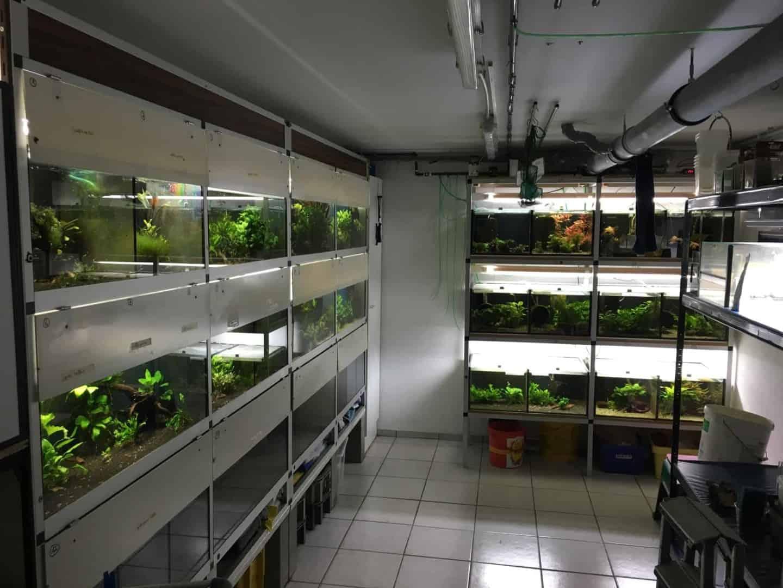 214: Garnelenzucht im Keller - Immer ein Aquarium zu wenig (Lars Dwinger) 3
