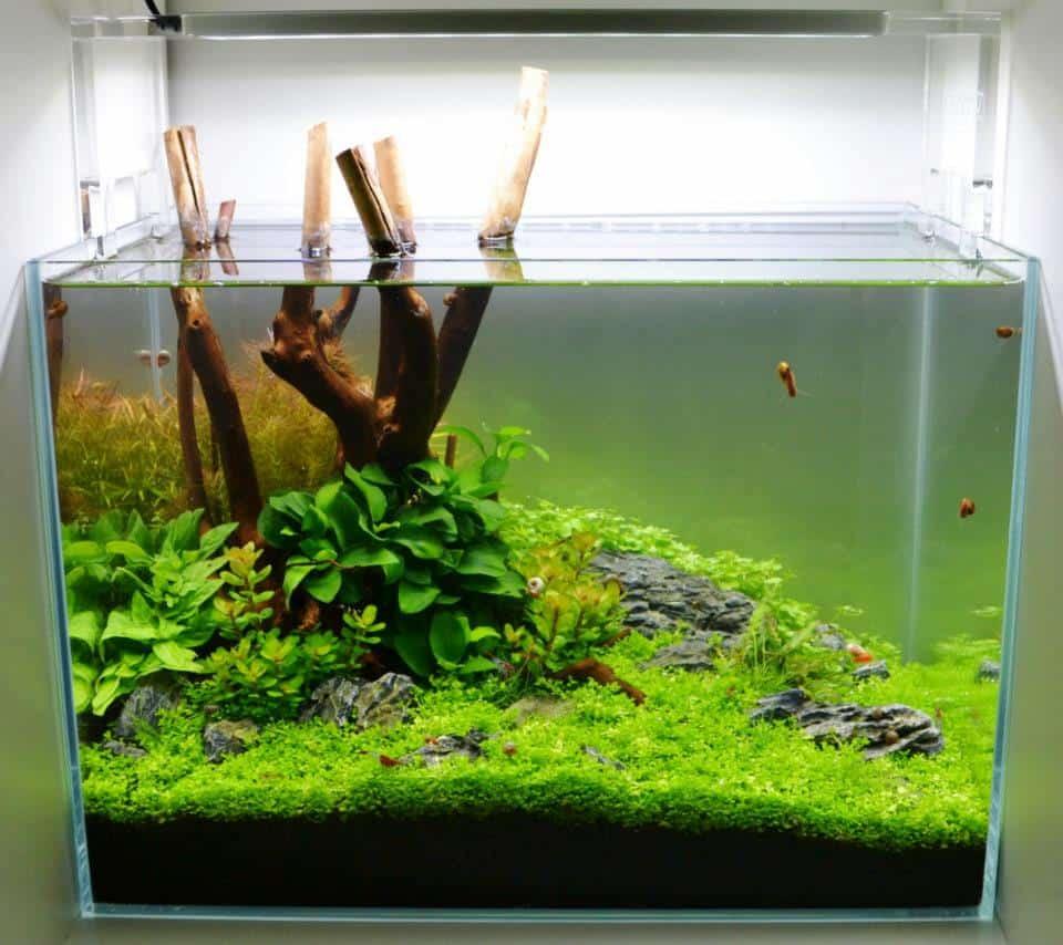 Facetten der Aquaristik 1