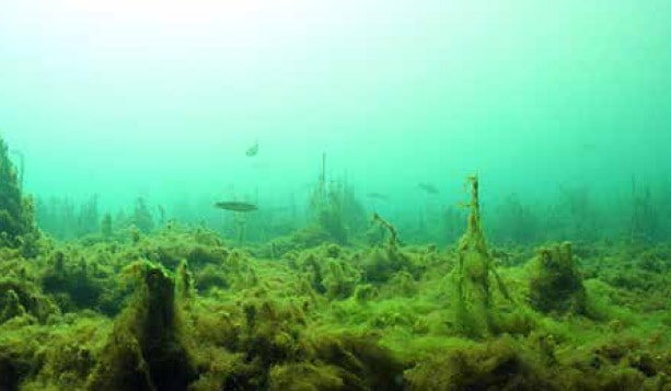 Biotop-Aquaristik 3