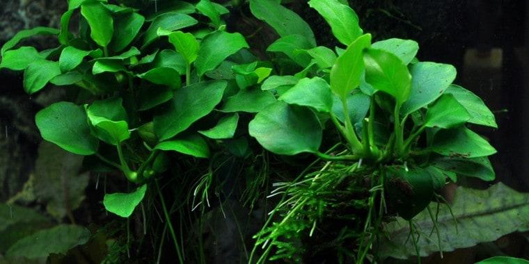 Wasserpflanzen 2