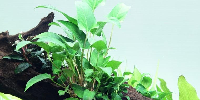 Wasserpflanzen 1