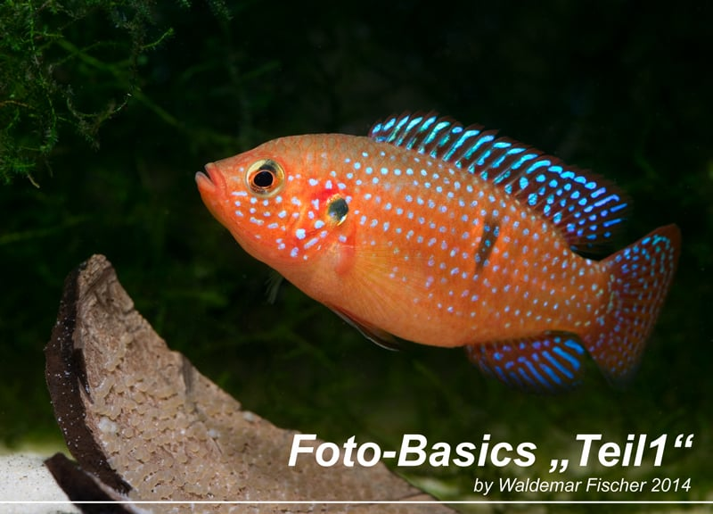 Aquarienfotografie 1