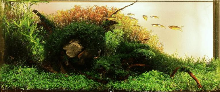 Aquascaping 2