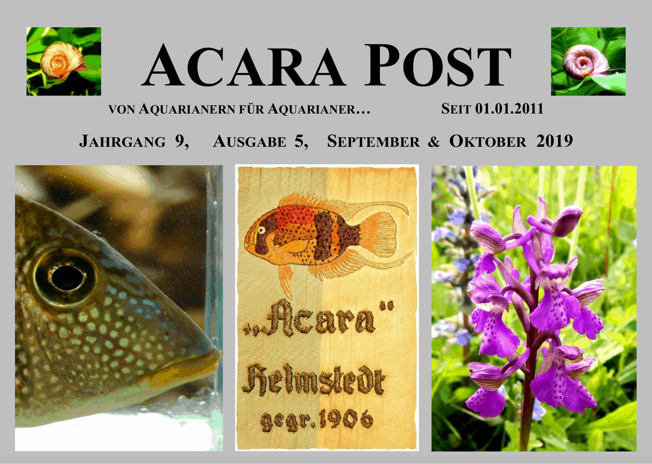 Acara-Post September & Oktober 2019 - jetzt kostenlos lesen