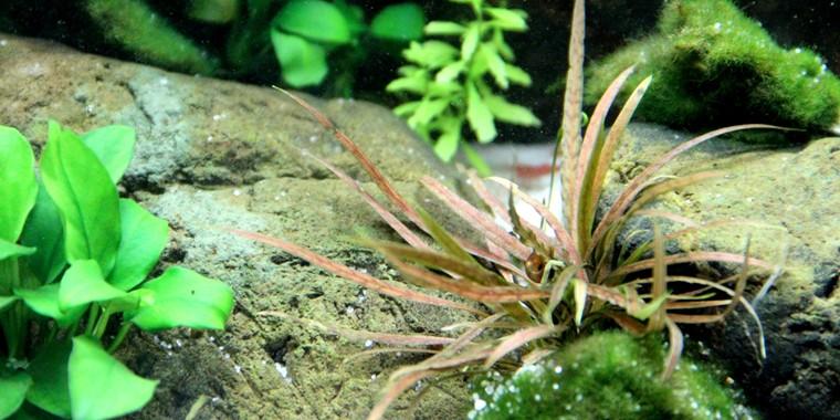 Wasserpflanzen 6