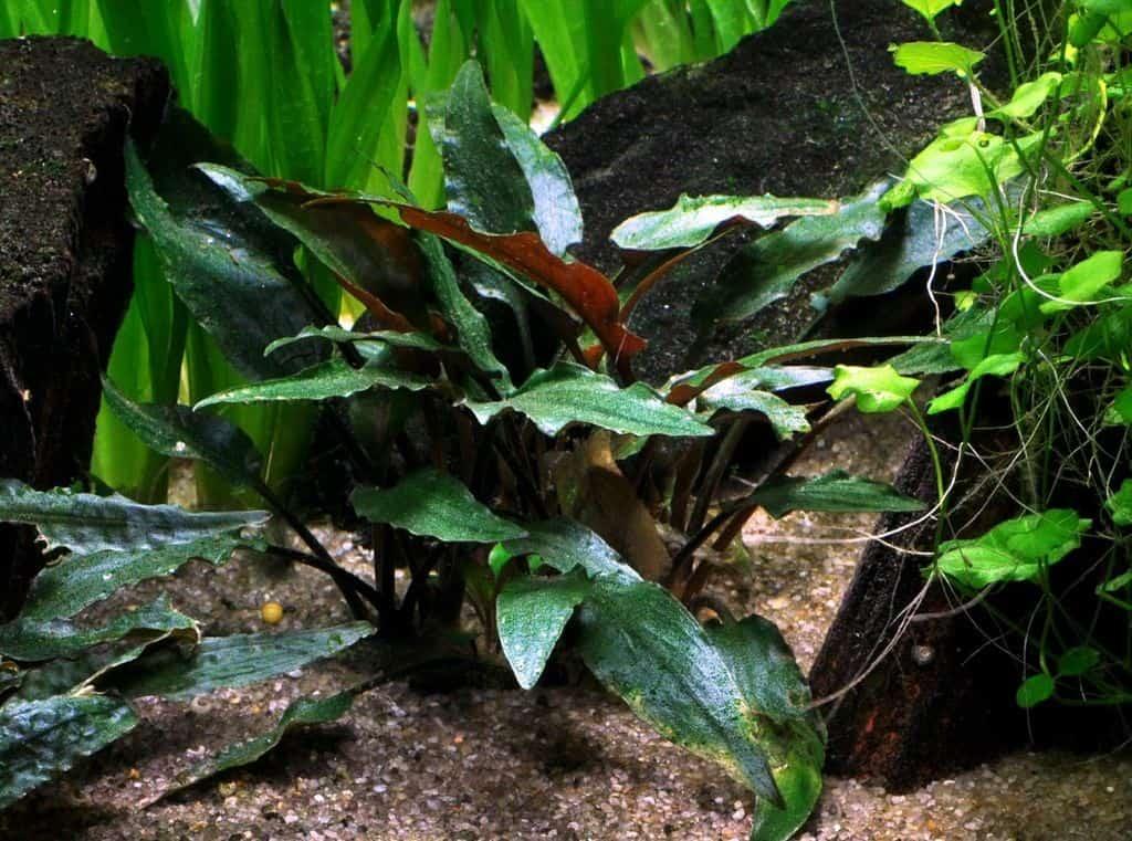 Pflanzen für den Mittelgrund 3