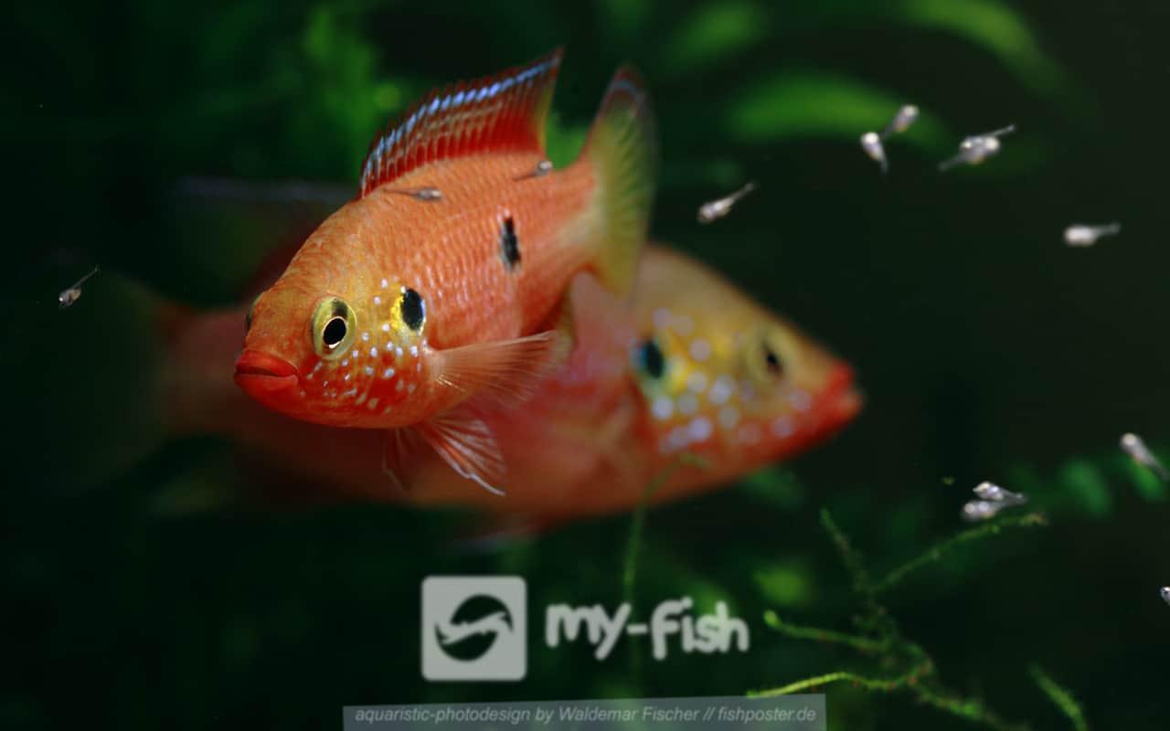 Facetten der Aquaristik 7