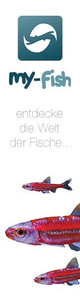 Werbebanner von my-fish 8