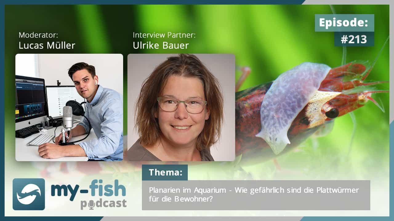 213: Planarien im Aquarium - Wie gefährlich sind die Plattwürmer für die Bewohner? (Ulrike Bauer) 1
