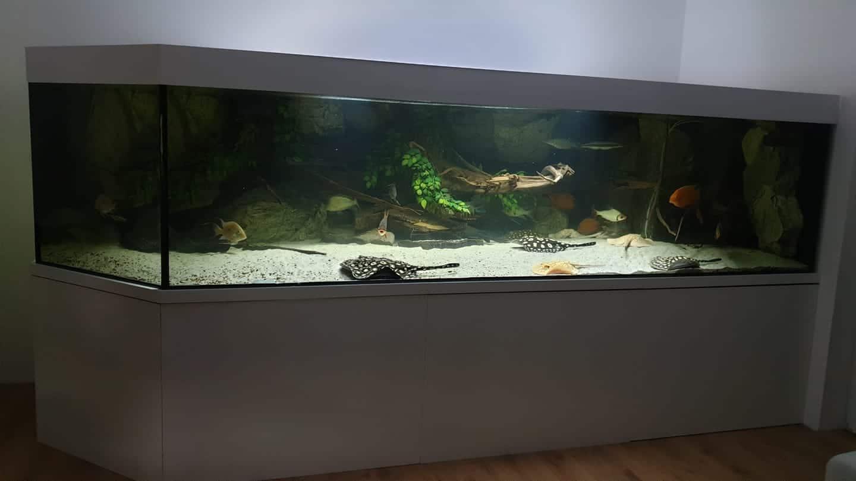 218: Süßwasserrochen im Aquarium - Haltung und Pflege von Potamotrygon (Thorben Hohmann) 8