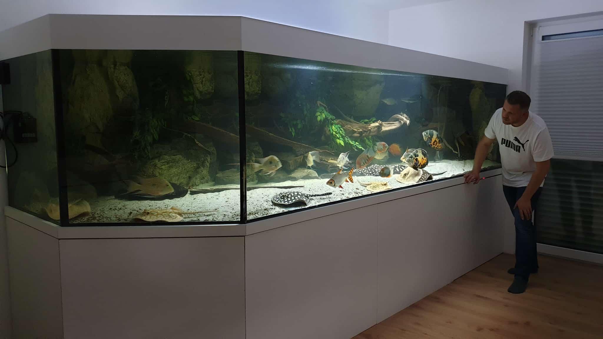 218: Süßwasserrochen im Aquarium - Haltung und Pflege von Potamotrygon (Thorben Hohmann) 9