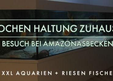 XXL Aquarien und Große Fische