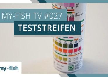my-fish TV: Mit Teststreifen schnell die wichtigsten Wasserwerte messen