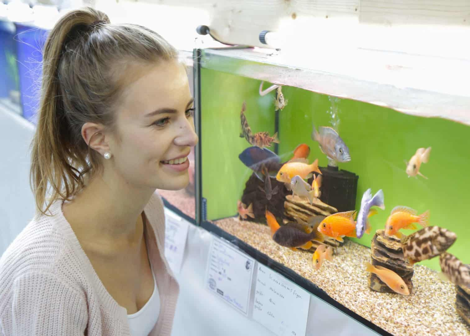 TIERisch gut zeigt Neu- und Wiedereinsteigern die Welt der Aquaristik 1