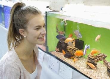 TIERisch gut zeigt Neu- und Wiedereinsteigern die Welt der Aquaristik