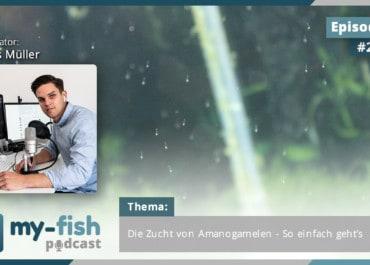 Podcast Episode #217: Die Zucht von Amanogarnelen - So einfach geht's (Lucas Müller)