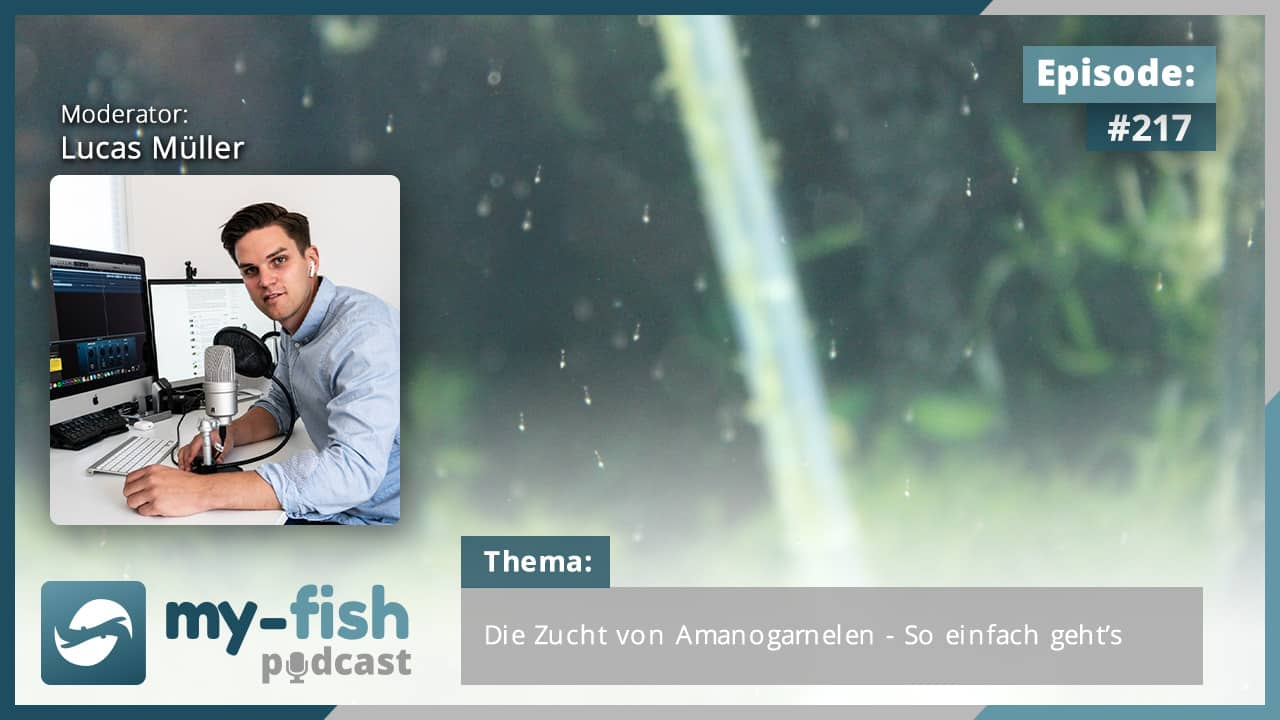 Podcasts über online-dating für christen