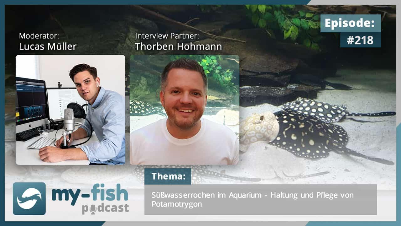 218: Süßwasserrochen im Aquarium - Haltung und Pflege von Potamotrygon (Thorben Hohmann) 1