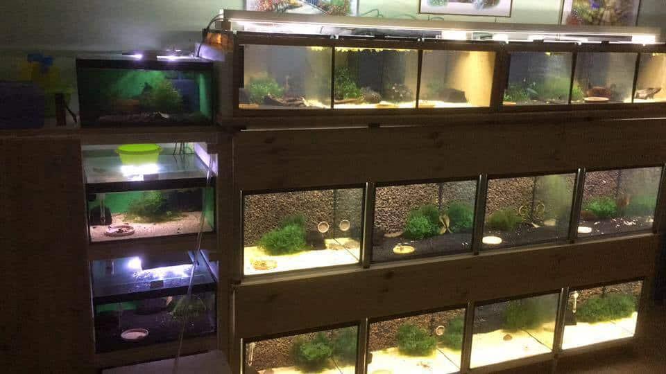 222: Wasser aus der Osmoseanlage - Die Grundlage für ein erfolgreiches Aquarium (Thomas Metzner) 3