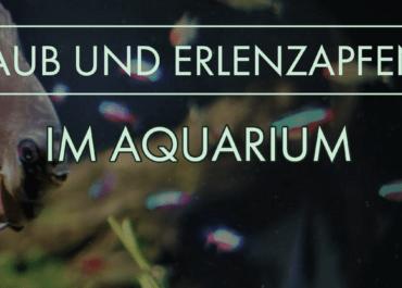 GarnelenTV: Laub und Erlenzapfen im Aquarium