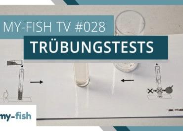 my-fish TV: Trübungstests korrekt benutzen