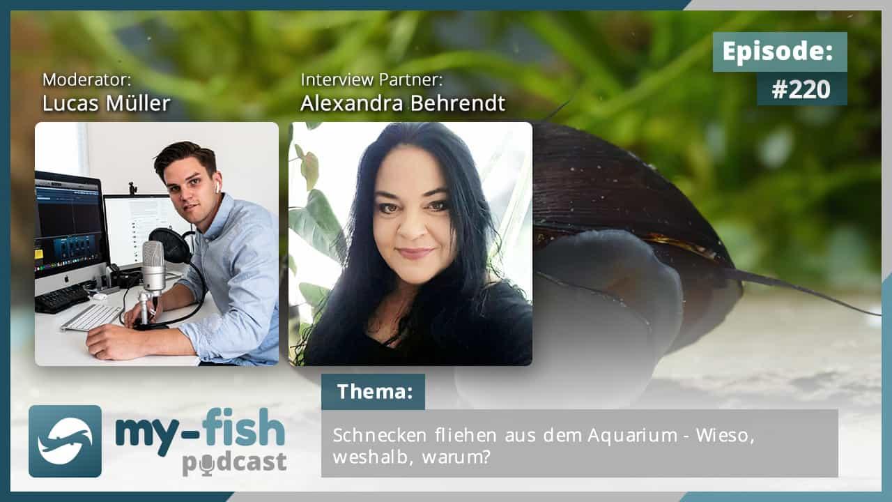 220: Schnecken fliehen aus dem Aquarium - Wieso, weshalb, warum? (Alexandra Behrendt) 1